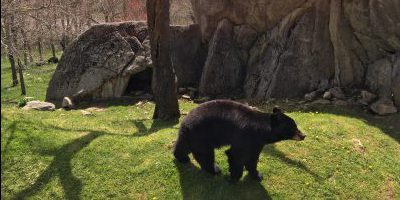 Bears should be out of hibernation by April!
